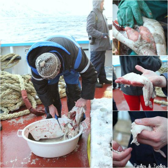 Pêche au Skrei - Sur le bateau on retire le foie et les oeufs