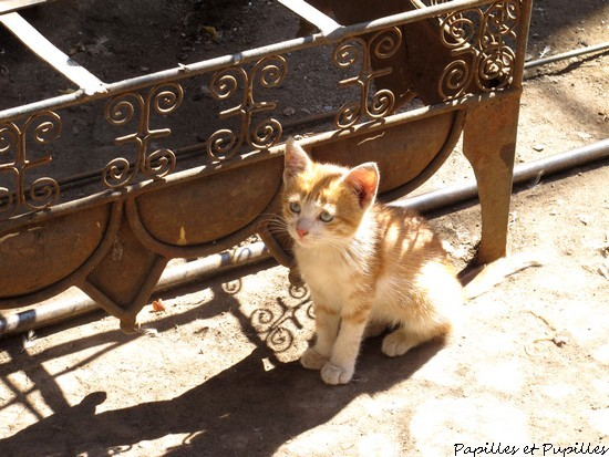 Chaton, Marrakech