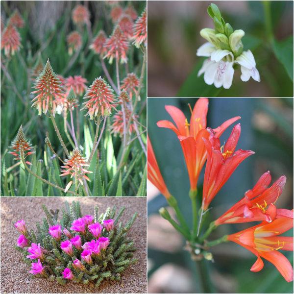 Le jardin majorelle marrakech for Guide des fleurs du jardin