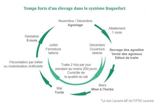 Temps forts d'un élevage dans le système Roquefort