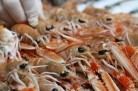 Langoustines ©Jypsygen - licence CC BY-NC-ND 2.0