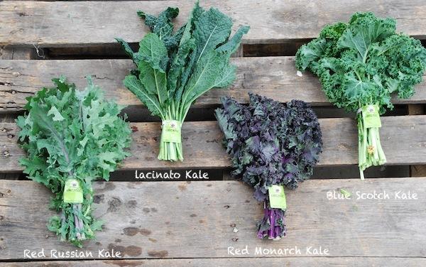 Différentes variétés de Kale ©SuziesFarm licence CC BY-NC-ND 2.0