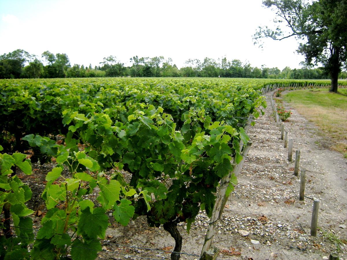 Vignoble Bordeaux ©Claude MARCHAND CC BY-NC-ND 2.0