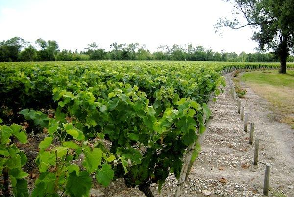 Vignoble Bordeaux ©Claude37 licence CC BY-NC-ND 2.0