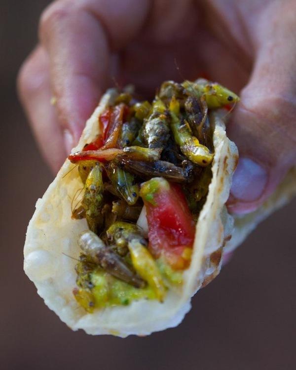 Tacos aux sauterelles - quoi pouah