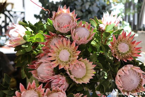 Marché aux fleurs Cape Town