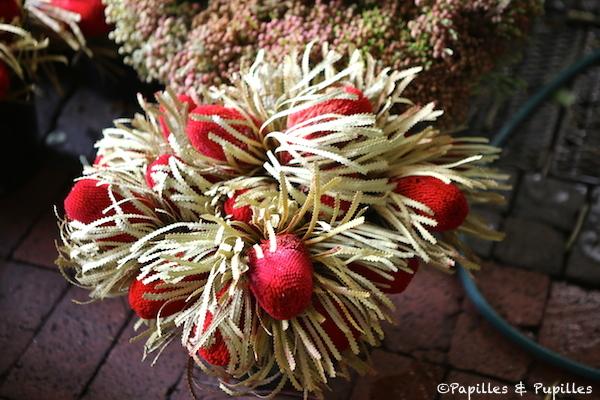 Marché aux fleurs -- Cape Town