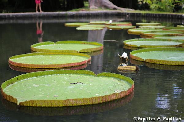 Le jardin de pamplemousses ile maurice - Grand bassin de jardin ...