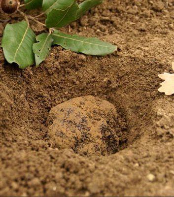 Truffes noires - Comment cuisiner les truffes noires ...