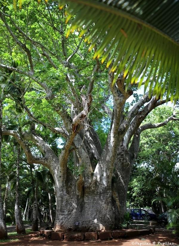 Le jardin de pamplemousses ile maurice for Baobab jardin