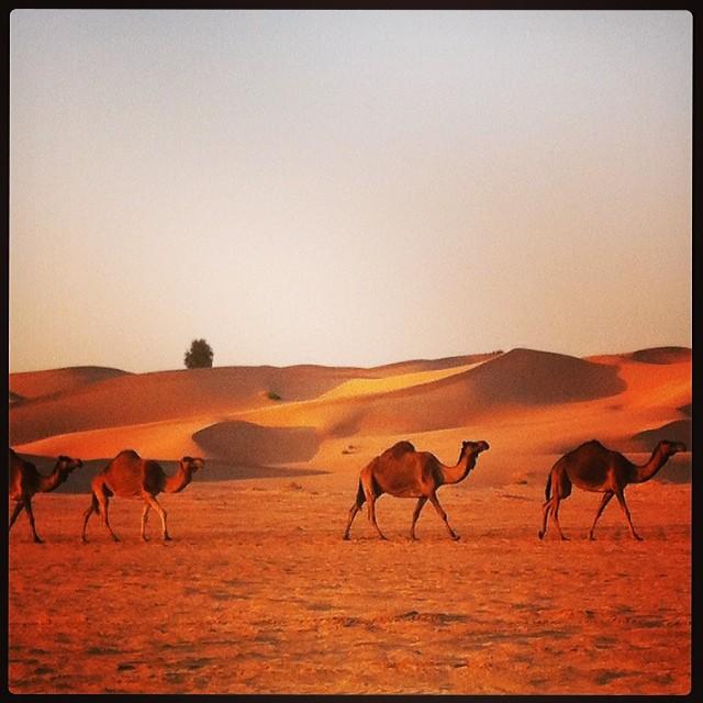 Caravane #abudhabi