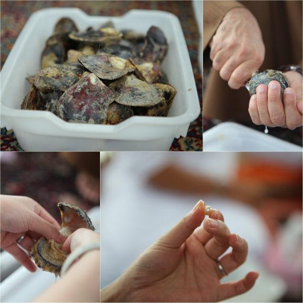 On ouvre l'huître, on touche à la recherche de la perle et on la sort