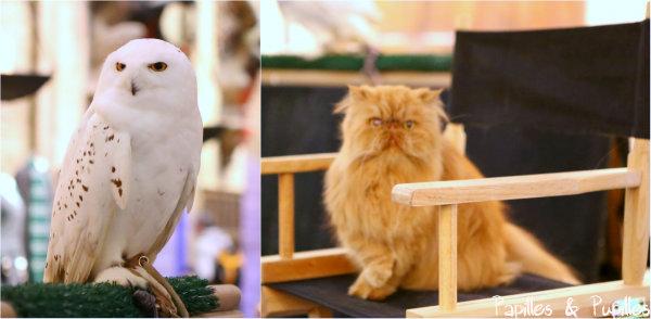Hedwige et Pattenrond