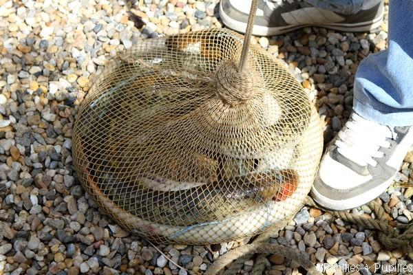 Les lamproies sont dans le filet, on va pouvoir les transporter