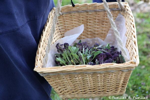 Notre récolte de fleurs de brocoli
