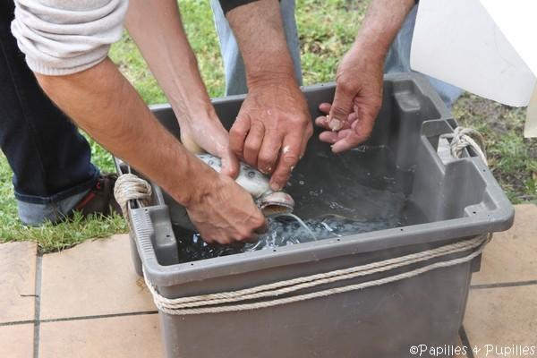 On rince à l'eau claire