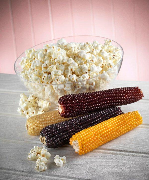 Popcorn ©Zaramama