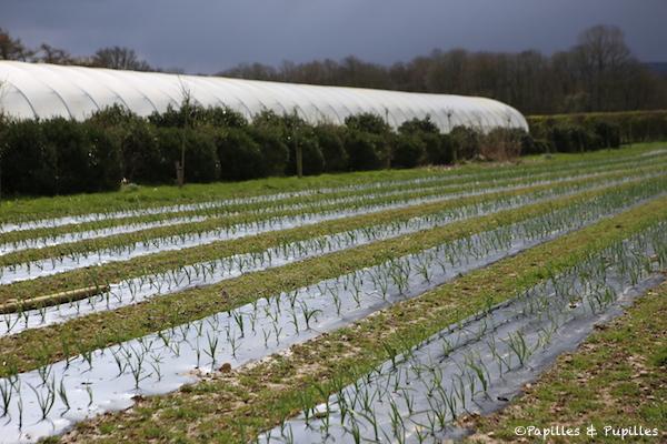 Plantation de poireaux Daysleford