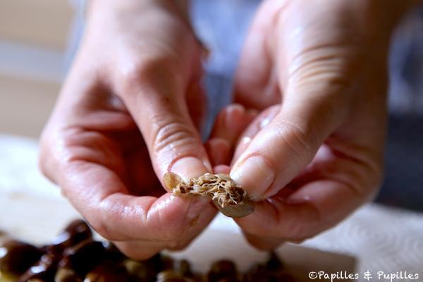 Câpre de Pantelleria - Le bouton de fleur
