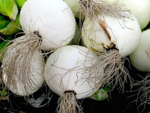 Oignons blancs ©srqpix CC BY 2.0