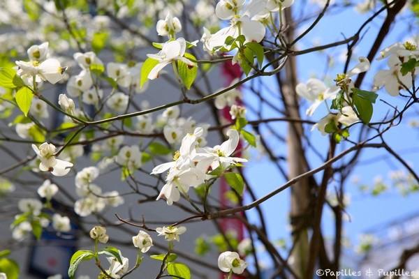 Tokyo en fleurs - Avril 2014