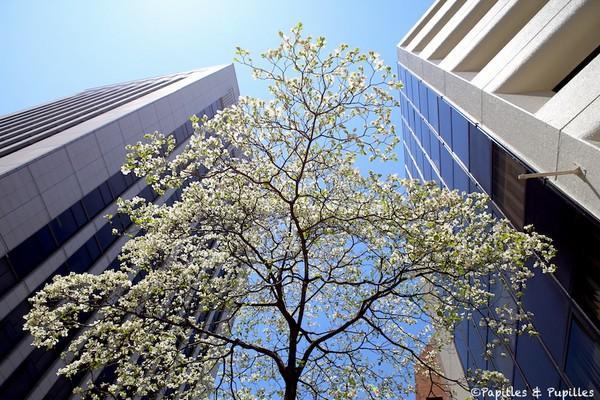 Tokyo en fleurs avril 2014