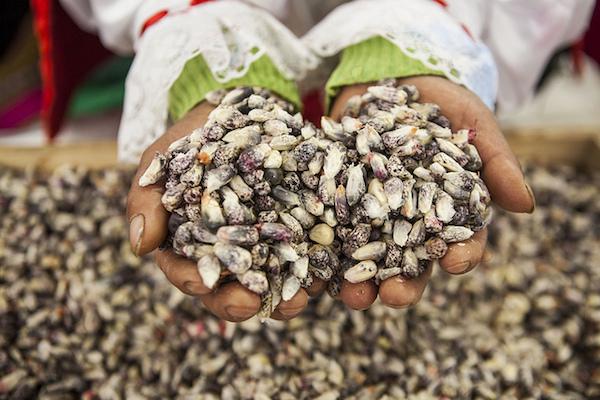 Maïs chulpi ©APEGA Sociedad Peruana de Gastronomía CC BY-NC-SA 2.0-