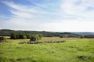 Canards Picaillons dans les champs ©D.Nakache
