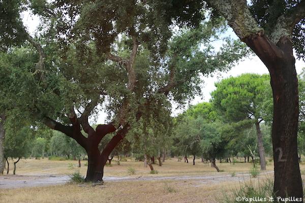 Forêt de Chênes lièges
