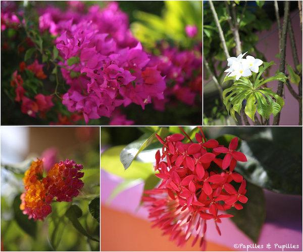 Les fleurs des Maldives