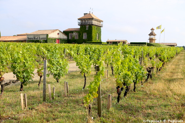 Les vignes de Château Smith Haut Lafitte