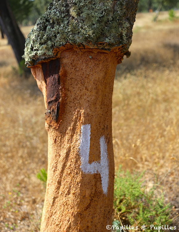 Marquage des arbres