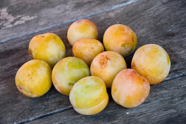 Prunes © Neydt - shutterstock