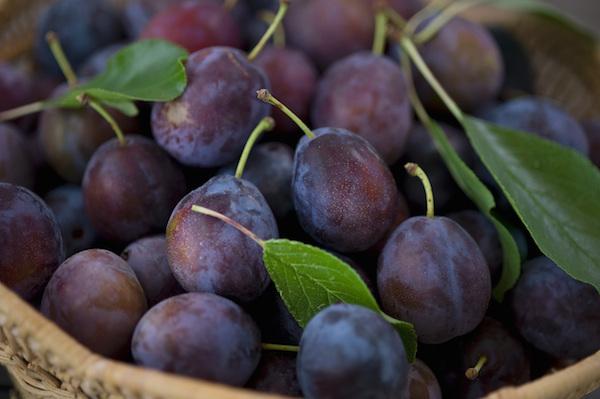 """Résultat de recherche d'images pour """"les prunes"""""""