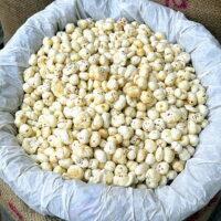 Graines de lotus séchées