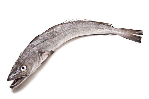 Merlu ©Edward Westmacott - shutterstock