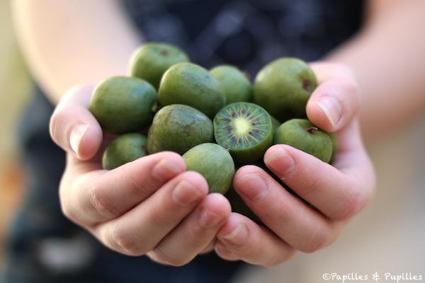 Comment donner kiwi bebe - Comment pousse les kiwi ...