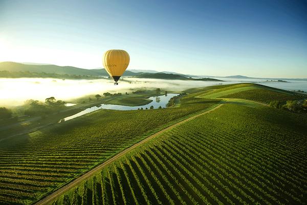Yarra Valley, terre de vins