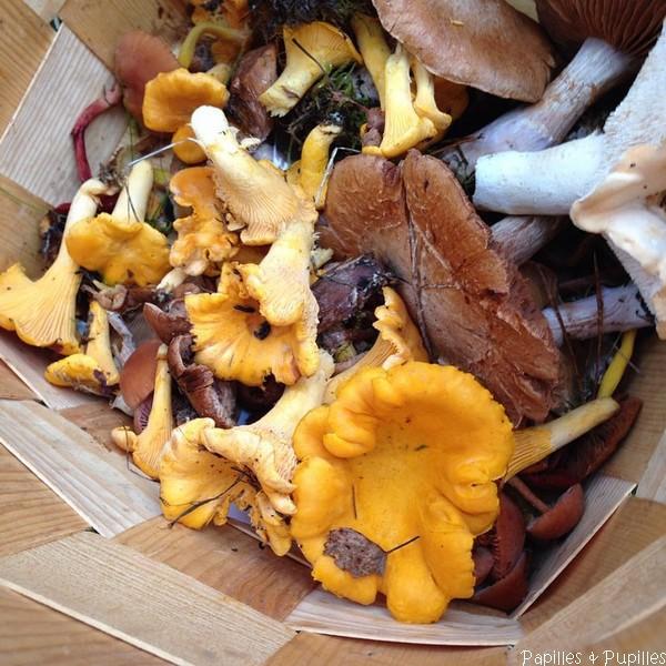 Cueillette de champignons - Finlande