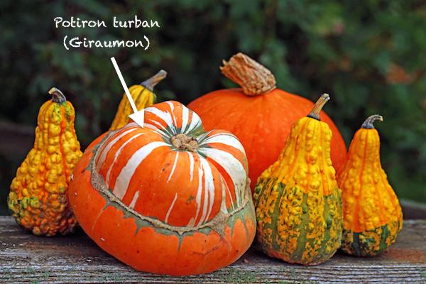 Giraumon aussi appelé potiron turban ©nnattalli shutterstock