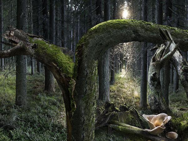 La Forêt finlandaise