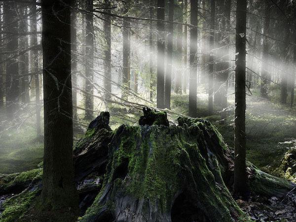 Taikametsa - Finlande