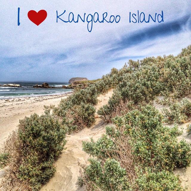 Kangaroo Island : sauvage et magnifique.