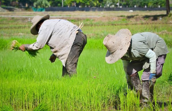 Rizière Thaïlande ©PunyaFamily shutterstock