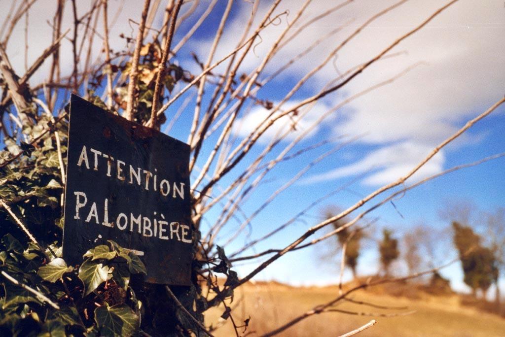 Palombière ©Damien Labat CC BY-NC-ND 2.0