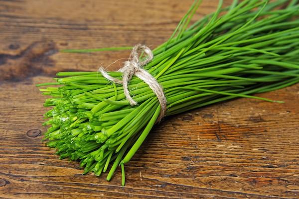 Ciboulette une d licieuse herbe aromatique for Portent en arabe