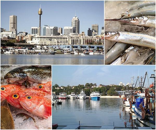 Marché aux poissons de Sydney