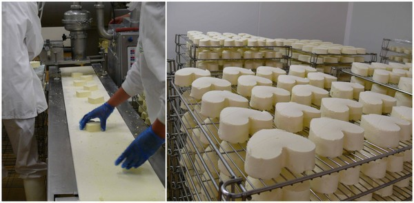 Selection des fromages et affinage
