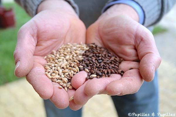 Les céréales, la base de la bière