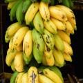 Bananes ©SPKW shutterstock